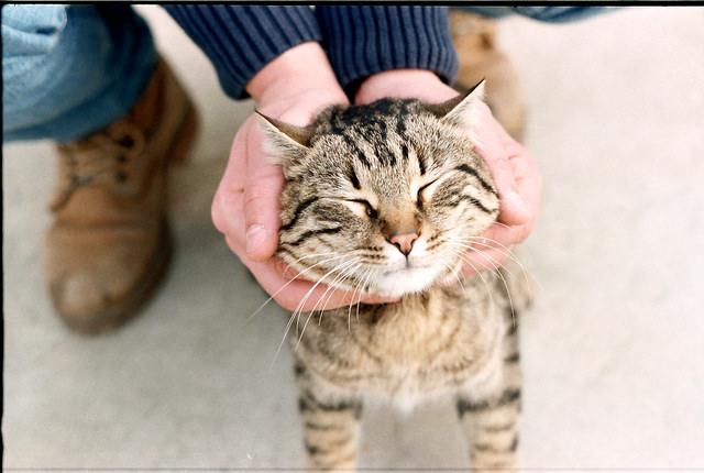 Man holding a cat